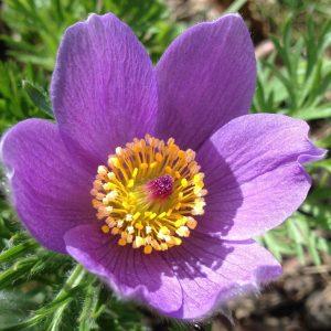 Natural Healing Flower
