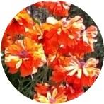 Testimonials Allergies, Pain, Fibromyalgia, Chronic Fatigue